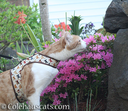 Quint's annual Spring garden walk - 2016 © Colehauscats.com