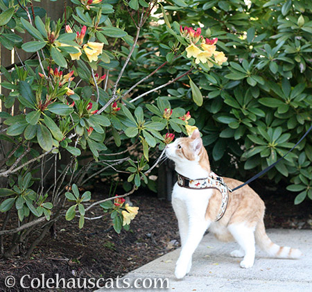 Quint taking in all the flowers - 2016 © Colehauscats.com