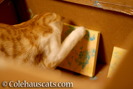 The early years, Quint learns to paint - 2012 © Colehauscats.com