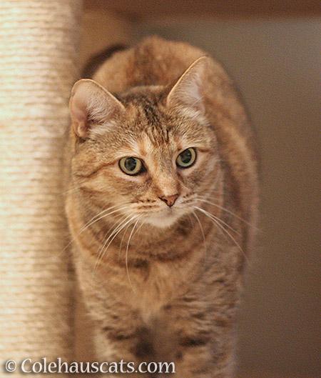 Ruby Roo - 2016 © Colehauscats.com