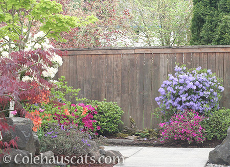 Our Spring garden - 2016 © Colehauscats.com