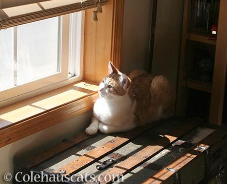 Sun-loving Quint - 2016 © Colehauscats.com