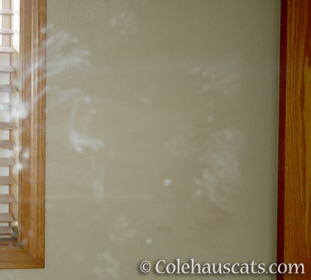 The Bathroom Mirror. How we know when Quint is ready to paint - 2013 © Colehaus Cats