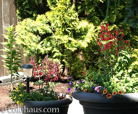 Some flowers - 2016 © Colehaus.com and Colehauscats.com