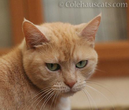 Grumpy Miss Newton - 2016 © Colehauscats.com
