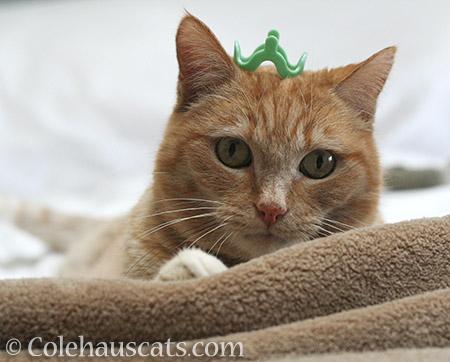Pretty Princess Green Itty - 2016 © Colehauscats.com