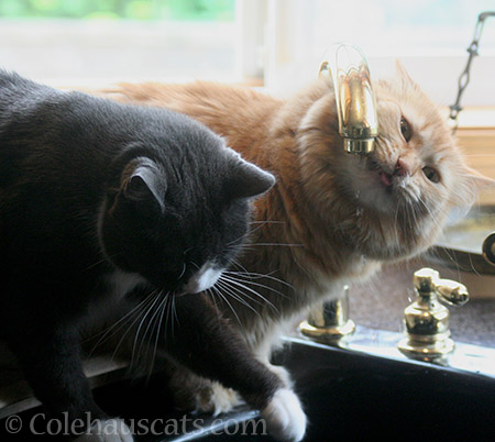 Tessa and Pia, faucet buddies - 2016 © Colehauscats.com