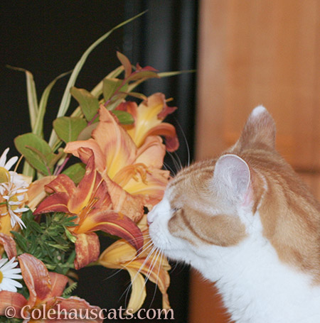 Quint and his summer flowers - 2016 © Colehauscats.com