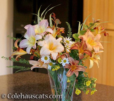 Summer Lilies - 2016 © Colehauscats.com