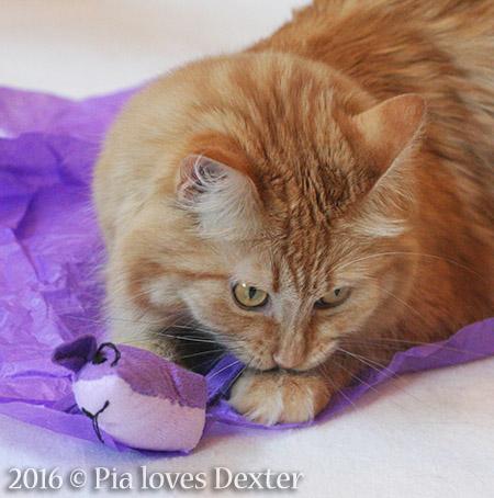 Nomming Dexter's mousie - 2016 © Colehauscats.com