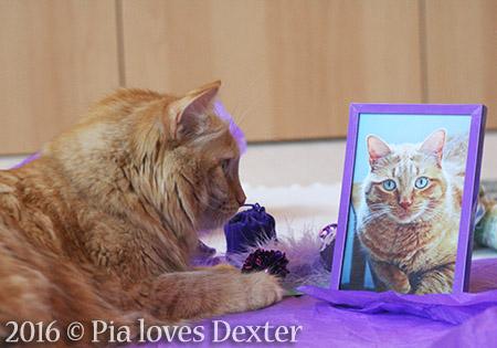 Pia loves Dexter - 2016 © Colehauscats.com
