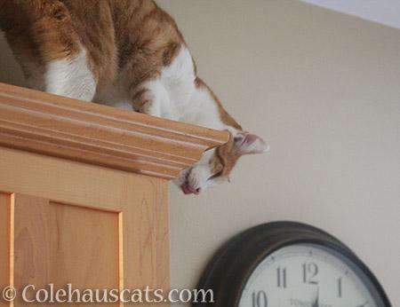 Quint finds Mischief - 2016 © Colehauscats.com