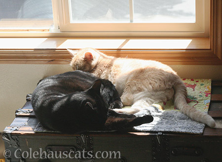 Olivia and Miss Newton - 2016 © Colehauscats.com