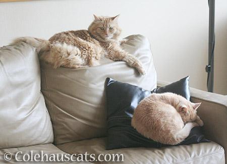 Sofa buddies - 2016 © Colehauscats.com