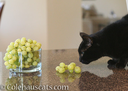 Olivia addresses the fruit - 2016 © Colehauscats.com
