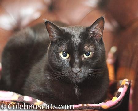 Olivia's magic bed - © Colehauscats.com
