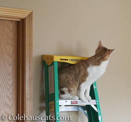 Paint Inspector Quint - 2016 © Colehauscats.com