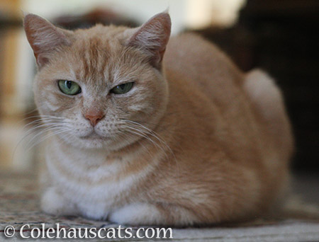 Miss Newton has a skeptical - 2016 © Colehauscats.com