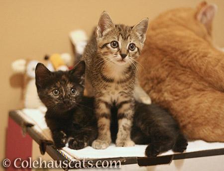 Illy, Viola, and mama Zuzu (2013) - 2013-2016 © Colehauscats.com