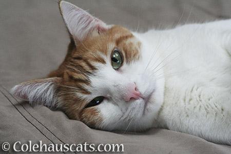 Quint - 2016 © Colehauscats.com