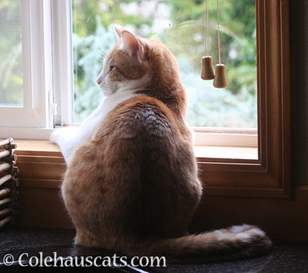 Storm watching with Quint - 2016 © Colehauscats.com