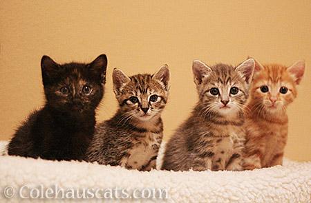 The Niblets - 2013-2016 © Colehauscats.com