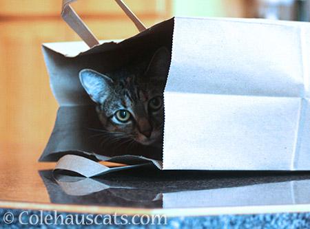 Bagged Viola - 2016 © Colehauscats.com