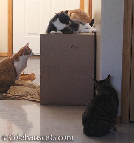Four More Colehaus Cats - 2016 © Colehauscats.com