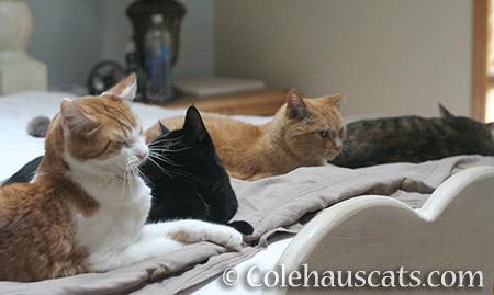Four Colehaus Cats - 2016 © Colehauscats.com