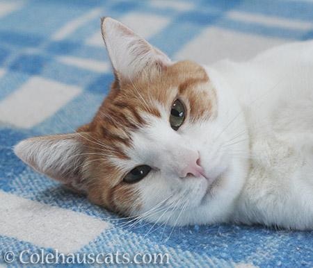 Smiling Quint - 2016 © Colehauscats.com