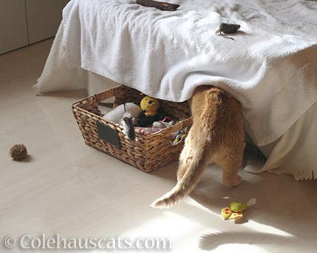 Sunny's Basket o' Toys - 2016 © Colehauscats.com