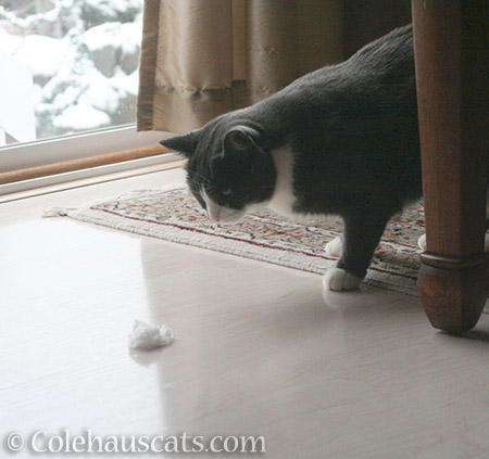 What's this? - 2016 © Colehauscats.com