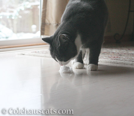 This is like whipped crème only not whipped crème - 2016 © Colehauscats.com