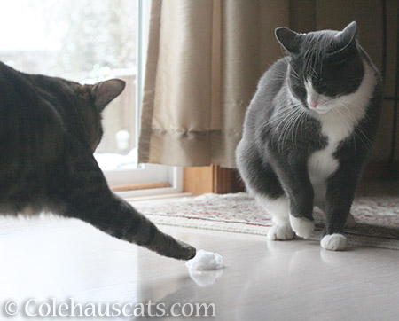 Can't you share, Tessa? - 2016 © Colehauscats.com