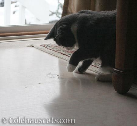 Hey! Where'd my snowball go? - 2016 © Colehauscats.com