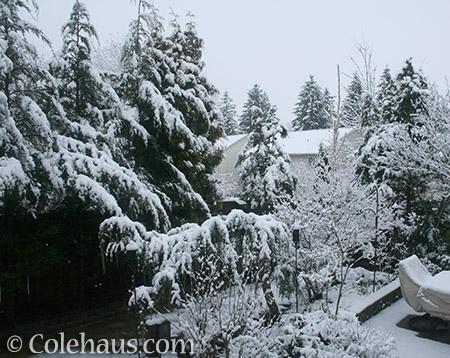 Garden snow 2012 - © Colehaus.com