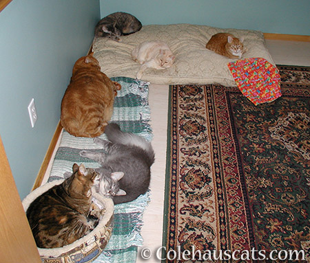 Some Colehaus Cats that came before - © Colehauscats.com