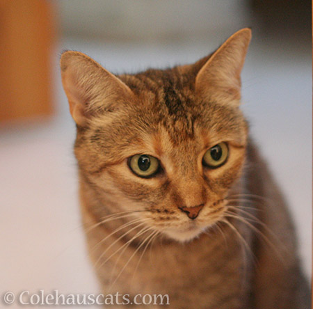 Brave Ruby - © Colehauscats.com