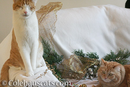 Have a very indifferent Christmas - © Colehauscats.com
