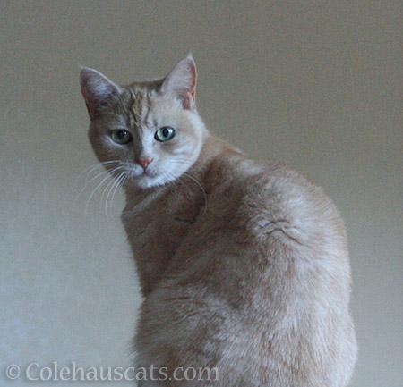 Miss Newton's official Colehaus Portrait - 2016 © Colehauscats.com