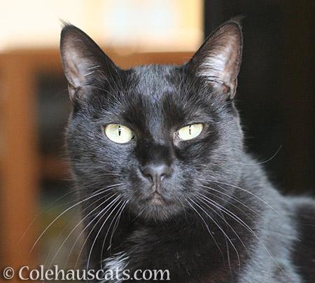Olivia listens - 2016 © Colehauscats.com