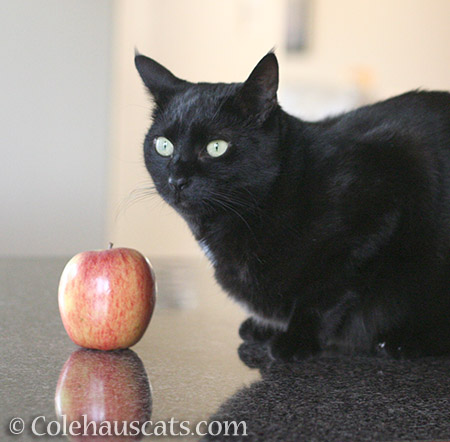 Olivia and her fruit - 2016 © Colehauscats.com