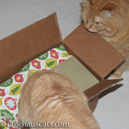 Miss Newton and Pia dive into their Secret Paws package - © Colehauscats.com
