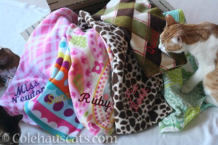 Personalized kitty blankets from SouthwestStitches - © Colehauscats.com