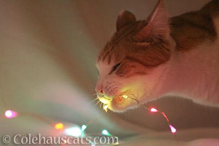 Quint eats the props - © Colehauscats.com