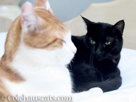 Quint and Olivia - © Colehauscats.com