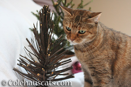 Ruby and the sad Christmas tree sticks - © Colehauscats.com