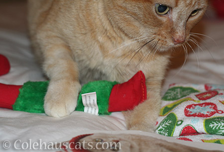 Sunny makes her Secret Paw gift selection - © Colehauscats.com