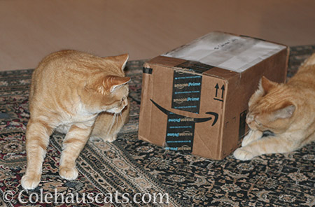 Patrol Sergeants Zuzu and Sunny inspect their Secret Paws package - © Colehauscats.com
