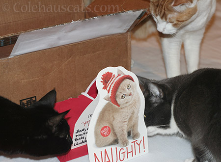 Olivia, Tessa and Quint try to find the meowing naughty cat - © Colehauscats.com
